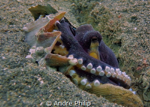Coconut Octopus in his fortress by Andre Philip