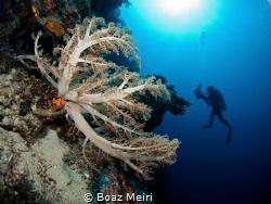 Reef by Boaz Meiri