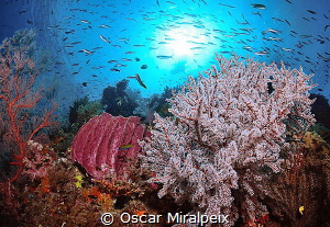 in raja ampat by Oscar Miralpeix
