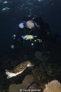 Diver/ photographer 'capturing' turtle. by David Gilchrist