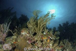 Reef Scenic, Roatan Marine Park, by David Gilchrist