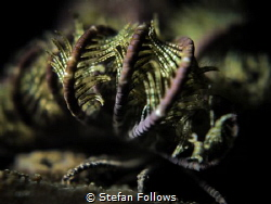 """""""Deep into that darkness peering, long I stood there, won... by Stefan Follows"""