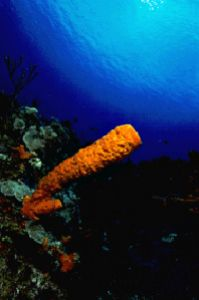 Vase sponge taken in Cozumel, Mexico, with Canon F1 in Ik... by Len Deeley