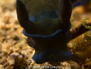 While diving up over a reef, I come face to face with.. by Lawrence Davis