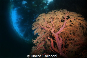 Under the Mangroves - TWO WORLDS by Marco Caraceni