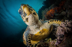 Turtle shooting up by Steven Miller