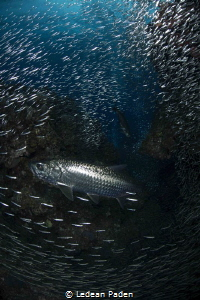 Grand Cayman and Silversides