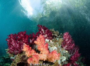 Raja Ampat by Leena Roy