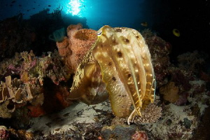 Cuttlefish garden by Steven Miller