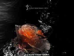 underwater experimental - abstract by Claudia Weber-Gebert