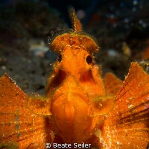 Rhinopia... .Bali, Indonesia by Beate Seiler