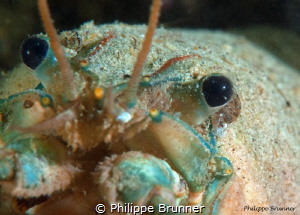 Crayfish in the Geneva Lake by Philippe Brunner