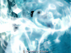 underwater picture taken in swiming pool by Mauricio Silerio