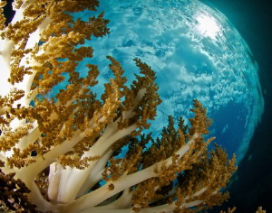 Common soft coral, uncommonly flat sea, and snell some ni... by Steven Miller