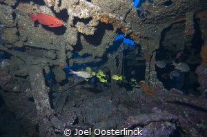 fishes in a wreck near st Gilles by Joel Oosterlinck
