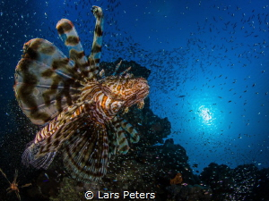 I took the photo at Makadi Bay, Egypt. We spent a week at... by Lars Peters