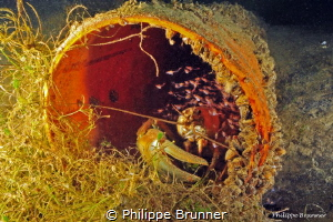 Crayfish and shrimp inside a tube by Philippe Brunner