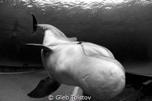 Very close by Gleb Tolstov