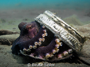 Coconut Octopust trying to hide by Beate Seiler
