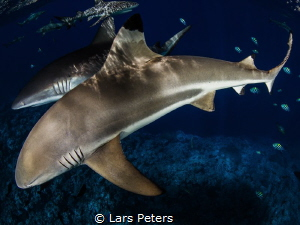 I shoot this photo on Yap, dive site Vertigo. by Lars Peters