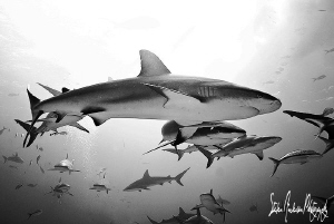 More sharks please ....This image was taken on a deeper r... by Steven Anderson