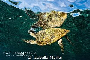 """JUST A BREATH"" by Isabella Maffei"