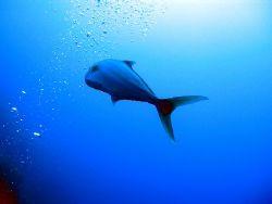 jackfish, tukey, kash (august 2005) by Gordana Zdjelar