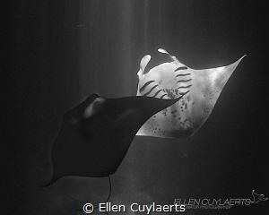 Yin Yang Manta dance at night in Kona Hawaii by Ellen Cuylaerts