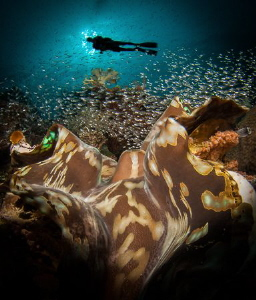 Big clam for here, and more open than you usually see the... by Steven Miller