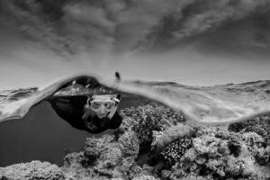Natural Over/Under B&W by Steven Miller