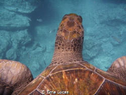Life as seen through Agatha's (our friendly turtle) eyes by Erna Lucas