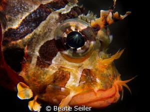 Lion fish portait by Beate Seiler