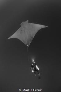 Mobula vs Diver, Azores by Martin Ferak