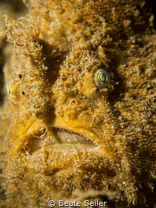 Frogfish face by Beate Seiler