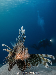Lionfish and DIver by Lars Peters