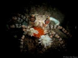Mosaic Boxer Crab with eggs by Albert Sáiz Tezanos