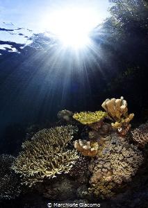 Raja Ampat .Mangrovie reef Nikon D800E, 16mm Nikon, two ... by Marchione Giacomo
