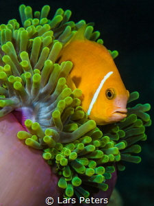Just another Nemo by Lars Peters