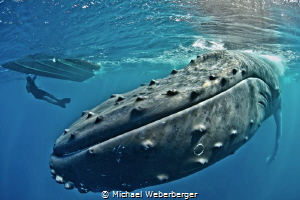 one of the greatest moments in my life free dive with Hum... by Michael Weberberger
