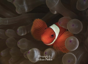 Just another day in the Ocean by Ledean Paden