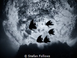 """""""If there must be trouble, let it be in my day, that my c... by Stefan Follows"""