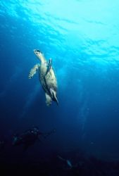 Leave me alone!!! Something Special Reef, Bonaire. Slide ... by Erich Reboucas