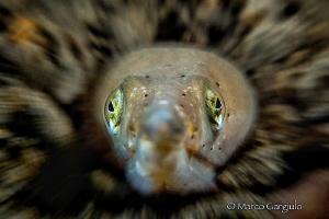 viper fish by Marco Gargiulo