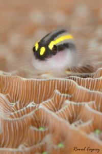 Tiny friend by Raoul Caprez