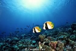 Fakarava coralreef by Cangemi Paul