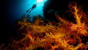 Big soft coral, small aperture, very close by Steven Miller