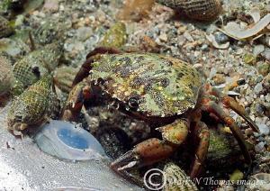 Eyeball for dinner. Aughrus Pier. by Mark Thomas