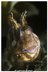 Blenny- 100mm macro by Vassilis Tsiairis