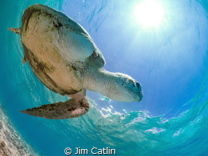'The Survivor' - resident turtle at Spotts Bay, Grand Cay... by Jim Catlin