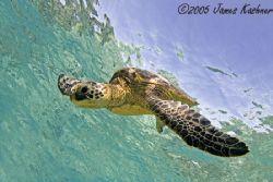Big Island Of Hawaii 12-24mm  shallow water by James Kashner